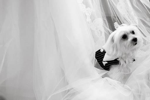 fotografia casamento Lodutti